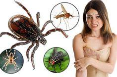 jak na obtížný hmyz - komáři, klíšťata,pavouci