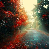 autumn day | Autumn Rain Day