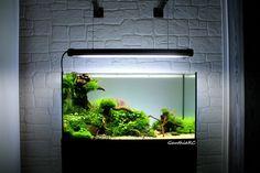 """Ancestral"" par Gauthier. #aquascaping #fishtank #aquarium"