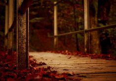 #autumn #bridge #closeup #fall #falling leaves #forest #hdr #landscape #macro #trees #woods