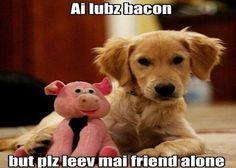 Ai lubz bacon but plz leev mai friend alone: more funny pictures @ http://www.fartinvite.com/