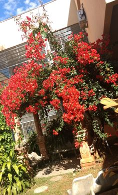 flores, vermelhas, flowers, 2017