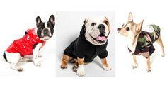 Bonchic Bonchien : styliste pour chien • DOG & LIFESTYLE