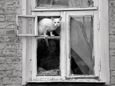 BY Katya Tarasova  (That doesn't look safe!!)