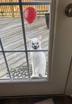 Oh look the cat found the makeup kit again. Cool Pictures, Funny Pictures, Random Pictures, Oh The Humanity, Funny Animals, Cute Animals, Bizarre Photos, Hogwarts Mystery, Cursed Images