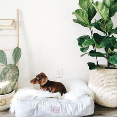 Harry Barker stylish grey tweed dog bed. Perfect for a minimalist modern interior design. Photo by: @cocotrann