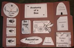 June - Honey Bees Unit Study - Bee Lapbook printables, link to Scholastic site with free bee lessons and printables Kindergarten Science, Teaching Science, Life Science, Bee Activities, Thematic Units, Diy Garden Projects, Nature Study, Project Based Learning, Save The Bees