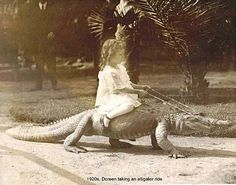 Have you a ever seen a girl riding a crocodile or a man riding a lion? Then you must see these photos. Have you a ever seen a girl riding a crocodile or a man riding a lion? Old Photos, Vintage Photos, Vintage Photographs, Crocodile Dundee, Saltwater Crocodile, Anime Meme, Doctor Who, Painted Horses, Crocodiles