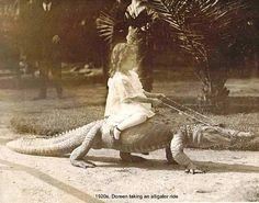 Just Doreen taking an alligator ride.  1920s