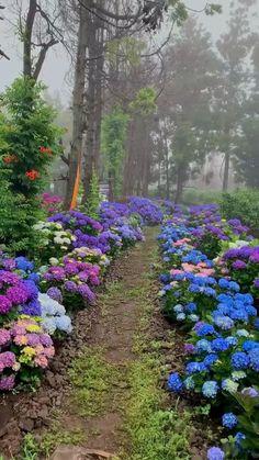 Dream Garden, Garden Art, Big Garden, Arrangements Ikebana, Front Yard Landscaping, Landscaping Ideas, Hydrangea Landscaping, Garden Cottage, Landscape Design