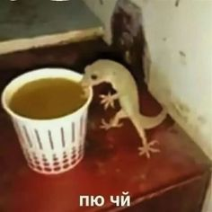 i wonder what he is drinking,,<<that's the tea, sis Cute Memes, Dankest Memes, Jokes, Meme Pictures, Reaction Pictures, Strange Pictures, Meme Faces, Funny Faces, Karma