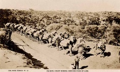 Australia Commonwealth Railways, Large pack train of Dromedary camels haling chaff in the Austraian Outback during the construction of the Trans-Australian Railway. Work In Australia, Western Australia, Camelus, Penal Colony, Tourism Poster, Work With Animals, Historical Photos, Old World, Genealogy