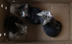 Cat Beatrix and her kittens from Northiam rehoming centre by Blue Cross.