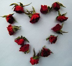bright red rose buds, heart shape