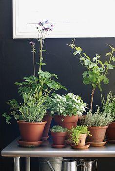 plants, plants, plants.