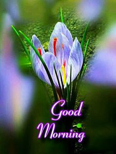 Good Morning Flowers Quotes, Sweet Good Morning Images, Good Morning Romantic, Good Morning Friends Images, Good Morning Beautiful Pictures, Good Morning Roses, Good Morning Cards, Good Morning Gif, Good Morning Picture