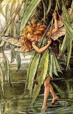 flower fairies cicely mary barker - Bing Images