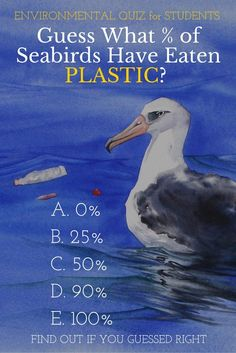 What % of Seabirds Have Eaten Plastic? Find out if you guessed right. | Mims House