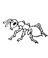 9 Best Ant Coloring Pages Images On Pinterest