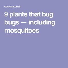 9 plants that bug bugs — including mosquitoes
