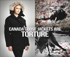 Canada Goose womens outlet authentic - Canada Goose Jackets Are TORTURE! | Animal Rights | Pinterest ...