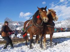 Winter wagoner's cart-horse competition - Slovakia. Competition, Horses, Cart, Winter, Animals, Travel, Nostalgia, Country, Covered Wagon