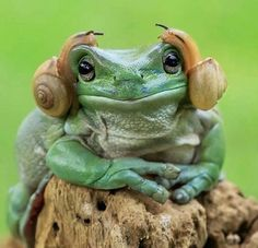 Star Wars by 2 snails and a frog