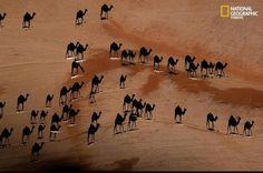 Look closely--the images you see are shadow cast by a caravan of camels photographed from directly overhead. The little white lines are the camels. Good job George Steinmetz from National Geographic! National Geographic, Photoshop, Images Cools, Cool Pictures, Cool Photos, Amazing Photos, Epic Photos, Famous Photos, Amazing Facts