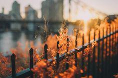 Autumn in New York ~