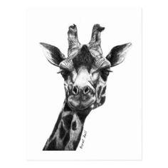Burney la girafe cartes postales
