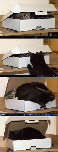 lol, cats