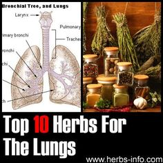 Herbs For Lungs - detailed list with research, references and background info.