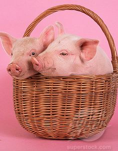 Basket of peegs. Way better than the Easter bunny.