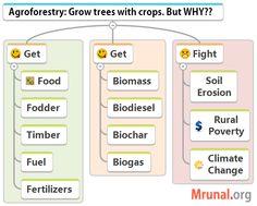 Agroforestry benefits