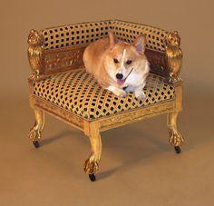 fancy dog :]