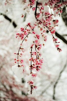 Winter snow blossoms.