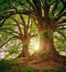 OnlineTutors - Udemy / Eduonix / Skillshare: [FREE] Growth Mindset: The Key to Greater Confidence and Impact Images Of Ireland, Landscape Wallpaper, Growth Mindset, In A Heartbeat, Faeries, Wood Wall Art, Woodland, Nature Photography
