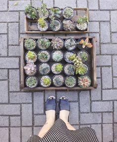 Borealis . plantas em casa (@borealisplantas) • Instagram photos and videos