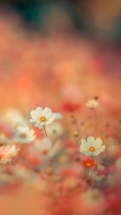 Makes me happy just looking at it - Hintergrundbilder - Blumen Flower Backgrounds, Flower Wallpaper, Nature Wallpaper, Iphone Wallpaper, Flowers Nature, Wild Flowers, Beautiful Flowers, Nature Nature, Field Of Flowers