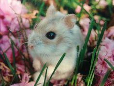 ¡Hamster!