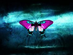 Look at it very hot Beautiful Bugs, Butterfly Wallpaper, Purple Butterfly, Runes, Wanderlust, Black And White, Butterflies, Animals, Stay Strong