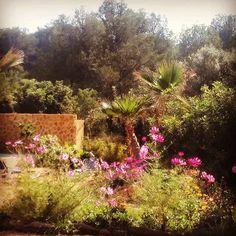 Desde el paraísoflores de otoño. #jardindelossentidos #jardíndelos secretos #corazonverde #ItxasmendINosCuida #Finestrat