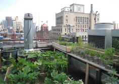Many trash items reused in this rooftop garden at NYC's Gramercy Park hotel. Click image for description and more photos & visit the Slow Ottawa 'Grow It' board for more green ideas.
