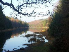 Llyn y parc. Gwydyr Forest.