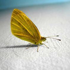 #Butterfly on the beach!  #iPad #retina #wallpaper