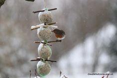 Vetbolslinger | zitplaats | roodborstje | winter | sneeuw | voeren