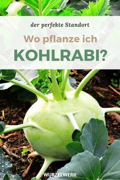 Real Plants, Growing Plants, Types Of Plants, Hydrangea Seeds, Hydrangea Care, Indoor Garden, Outdoor Gardens, Chou Rave, Diy Chicken Coop