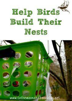 Help Birds Build Their Nests Fun Brain, Ribbon Yarn, Unit Studies, Soda Bottles, Pine Needles, Nests, Science Activities, Reggio, Fabric Scraps