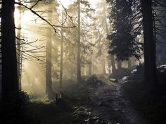 The fog rolls in through the forest