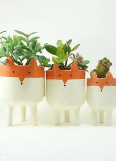 A family of foxes is the perfect home for succulents.